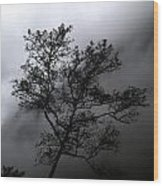 Tree In Mist Wood Print