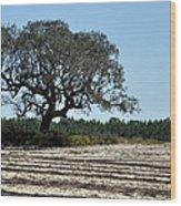 Tree In Plowed Field Wood Print