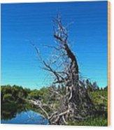 Tree In The Marsh Wood Print