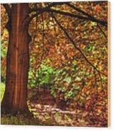 Tree In The Park. De Haar Castle. Utrecht  Wood Print