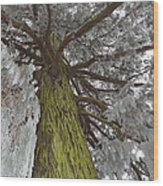 Tree In Winter Wood Print