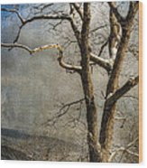 Tree In Winter Wood Print by Lois Bryan