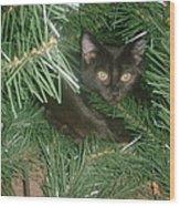 Tree Kitten Wood Print