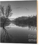 Tree Lake Wood Print