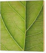 Tree Leaf Wood Print