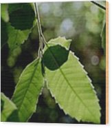 Tree Leaves Wood Print