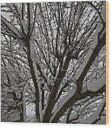 Tree Limb 4 Wood Print