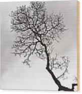 Tree Limb Wood Print