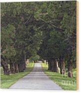 Tree Lined Drive - D008564 Wood Print
