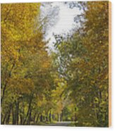 Tree Lined Park On A Fall Day Wood Print