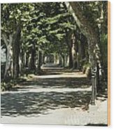 Tree Lined Promenade Wood Print