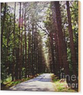 Tree Lined Road Wood Print by Crystal Joy Photography