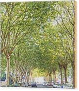Tree-lined Street Wood Print