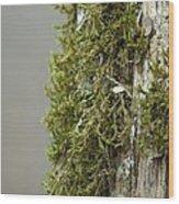Tree Moss Closeup 2013 Wood Print