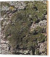 Tree Moss Wood Print