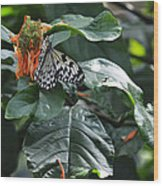 Tree Nymph On Blossom Wood Print