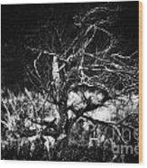 Tree Of Darkness Wood Print