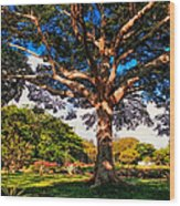 Tree Of Joy. Mauritius Wood Print
