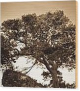Tree Of Life In Sepia Wood Print