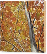 Tree Of Orange Wood Print by Guy Ricketts