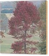 Tree Of Red Wood Print