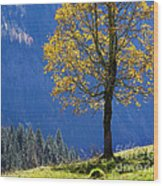 Tree Of Seasons Wood Print