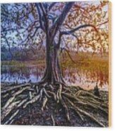 Tree Of Souls Wood Print