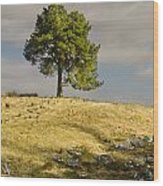 Tree On A Hill Vertical Wood Print