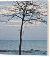 Tree On Beach Wood Print