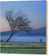 Tree On The Banks Of The River Clyde Wood Print