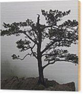 Tree On The Blue Ridge Parkway Wood Print
