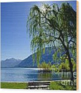 Tree On The Lakefront Wood Print