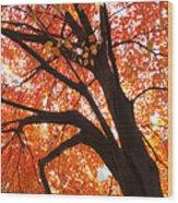 Tree Orange Blast Wood Print