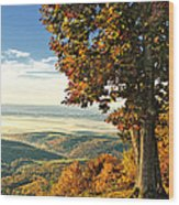 Tree Overlook Vista Landscape Wood Print