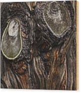 Tree Owl Wood Print