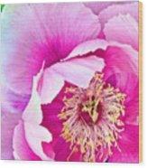 Tree Peony....what An Amazing Flower Wood Print