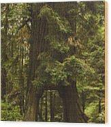 Tree Redwood Ca 7 Wood Print