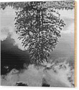 Tree Reflected  Wood Print