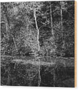 Tree Reflection In Chesapeake And Ohio Canal Wood Print