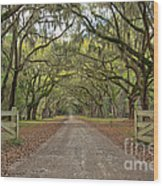 Tree Road Wood Print