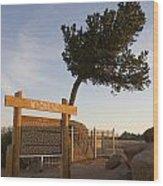 Tree Rock Wyoming Wood Print