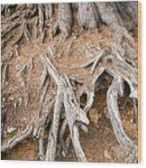 Tree Root Wood Print