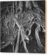 Tree Roots Black And White Wood Print by Matthias Hauser