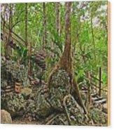 Tree Roots On Rock Wood Print