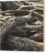 Tree Roots  Wood Print