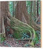 Tree Roots Tropical Rainforest Wood Print