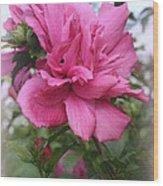 Tree Rose Of Sharon Wood Print