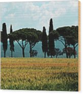 Tree Row In Tuscany Wood Print