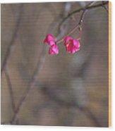 Tree Seed Capsule Pod Bursts Wood Print