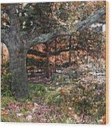 Tree Series 46 Wood Print